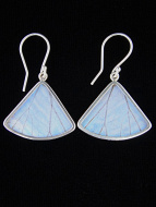 Pearl Blue Morpho (Morpho sulkowski) Fan Shimmerwing Earrings