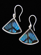 Blue Flash (Ancyluris Meliboeus) Fan Shimmerwing Earrings set in sterling silver