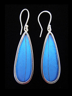 Blue Morpho (Morpho didius) Long Drop Shimmerwing Earrings set in sterling silver