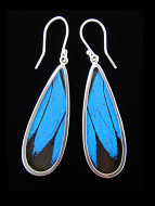 Blue & Black (Papilio ulysses) Long Drop Shimmerwing Earrings set in sterling silver