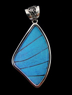 Large Blue Morpho Fan (Morpho didius) Shimmerwing pendant with butterfly set in sterling silver