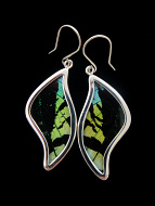 Medium Aquamarine & Black Swish (Urania leilus) Shimmerwing earrings with butterfly set in sterling silver