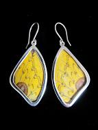 Medium Yellow Fan (Loepa megacore) Shimmerwing earrings with butterfly set in sterling silver