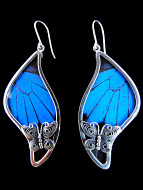 Large Blue & Black Swish (Papilio ulysses) Shimmerwing earrings with butterfly set in sterling silver