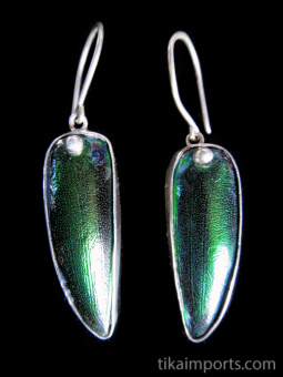 Sterling silver earrings featuring the natural wing casings from Sternocera aequisignata beetles.