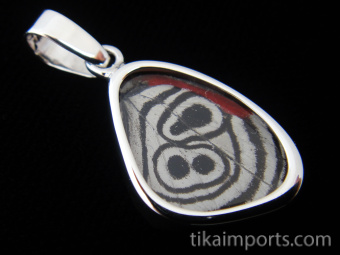 """Tiny """"88"""" (Diaethria neglecta) Shimmerwing pendant with butterfly set in sterling silver"""