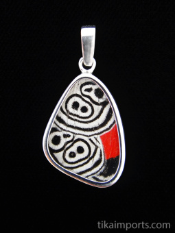 """Small """"88"""" (Diaethria neglecta) Shimmerwing pendant with butterfly set in sterling silver"""