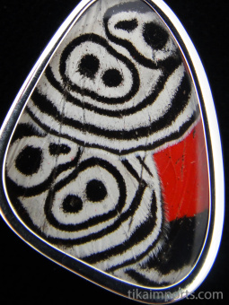 """Closeup of small """"88"""" (Diaethria neglecta) Shimmerwing pendant with butterfly set in sterling silver"""