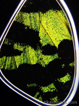 closeup of small green and black (Urania rhipheus) shimmerwing pendant with butterfly set in sterling silver