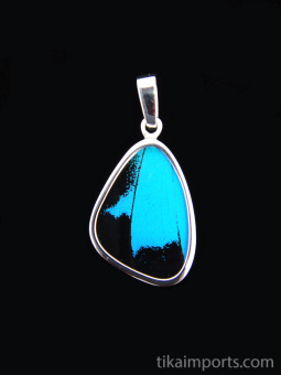 Small Blue & Black (Papilio ulysses) Shimmerwing pendant with butterfly set in sterling silver