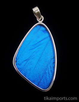 Large Blue Morpho Wing (Morpho didius) Shimmerwing pendant with butterfly set in sterling silver