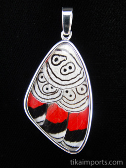 """Large """"88"""" (Diaethria neglecta) Shimmerwing pendant with butterfly set in sterling silver"""