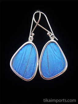 Small Blue Morpho (morpho didius) Shimmerwing earrings with butterfly set in sterling silver