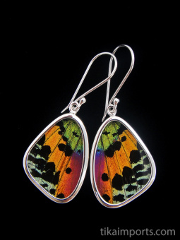 Small Rainbow Sunset (Urania rhipheus) Shimmerwing earrings with butterfly set in sterling silver