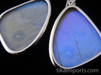 Closeup of Small Pearl Blue (Morpho sulkowski) Shimmerwing earrings with butterfly set in sterling silver