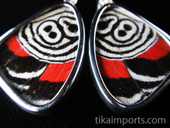 """Closeup of Small """"88"""" (Diaethria neglecta) Shimmerwing earrings with butterfly set in sterling silver"""