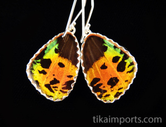 Reverse view of Small Hot Sunset Wing (Urania rhipheus) Shimmerwing earrings with butterfly set in sterling silver