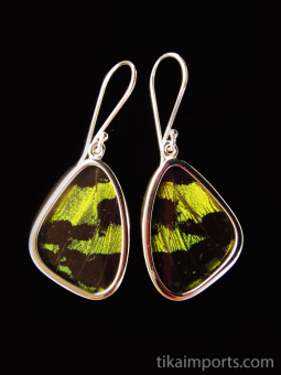 Small Green & Black Wing (Urania leilus) Shimmerwing earrings with butterfly set in sterling silver