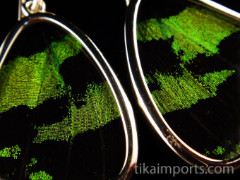 Closeup of Small Green & Black Wing (Urania leilus) Shimmerwing earrings with butterfly set in sterling silver