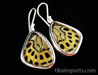 Small Sage Green (Callithea Philotima) Shimmerwing earrings with butterfly set in sterling silver