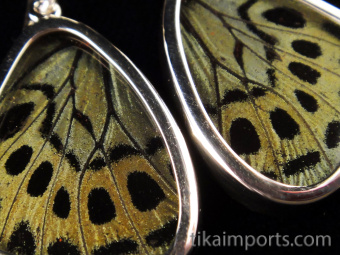 Closeup of Small Sage Green (Callithea Philotima) Shimmerwing earrings with butterfly set in sterling silver