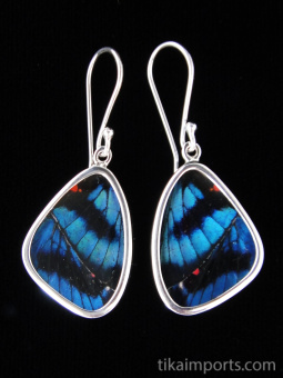 Small Blue Flash (Ancyluris Meliboeus) Shimmerwing Earrings set in sterling silver