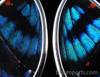 Small Blue Flash (Ancyluris Meliboeus) Shimmerwing Earrings set in sterling silver - closeup