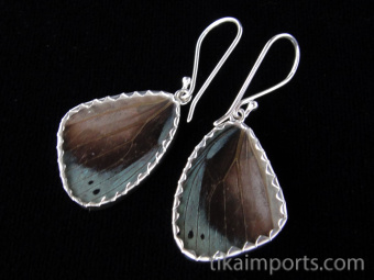 Small Blue Flash (Ancyluris Meliboeus) Shimmerwing Earrings set in sterling silver - reverse