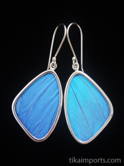 Medium Blue Morpho (morpho didius) Shimmerwing earrings with butterfly set in sterling silver