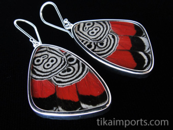 """Large """"88"""" (Diaethria neglecta) Shimmerwing earrings with butterfly set in sterli"""