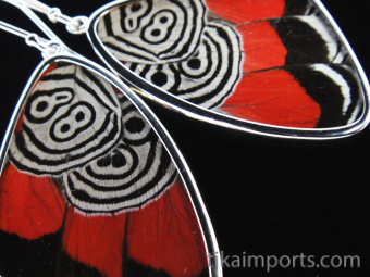 """Closeup of Large """"88"""" (Diaethria neglecta) Shimmerwing earrings with butterfly set in sterli"""