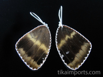 """Reverse of Large """"88"""" (Diaethria neglecta) Shimmerwing earrings with butterfly set in sterli"""
