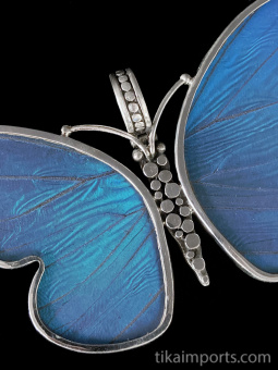 Large Blue Morpho (Morpho didius) Shimmerwing Pendant set in sterling silver butterfly design - closeup
