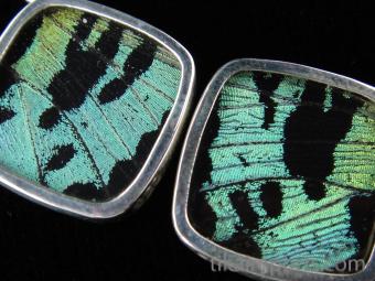 Aquamarine (Urania rhipheus) Diamond Shimmerwing Earrings set in sterling silver