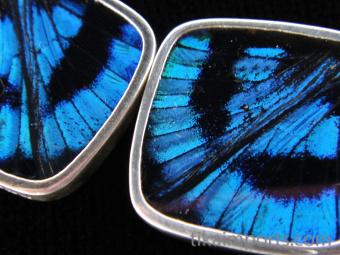 Blue Flash (Ancyluris Meliboeus) Diamond Shimmerwing Earrings set in sterling silver - closeup