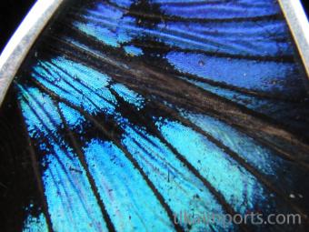 Blue Flash (Ancyluris Meliboeus) Fan Shimmerwing Earrings set in sterling silver - closeup