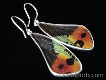 Rainbow Sunset (Urania rhipheus) Long Wing Shimmerwing Earrings set in sterling silver - reverse