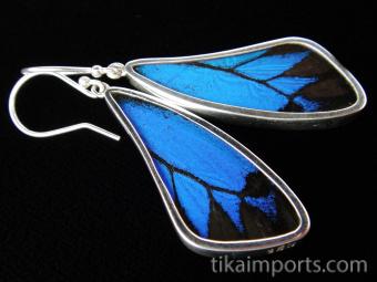 Blue & Black (Papilio ulysses) Long Wing Shimmerwing Earrings set in sterling silver