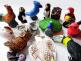 Critter Beads Birds Assortment