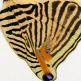closeup, the front of a hindwing of an Colobura dirce butterfly