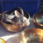 carefree kitten in singing bowl