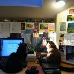 office kitties Bodhi and Poppy gazing out the window