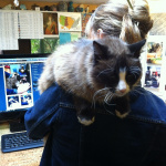 Bodhi the office kitty helping Britta get her work done