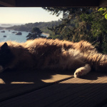 office kitty Bodhi napping in the sun