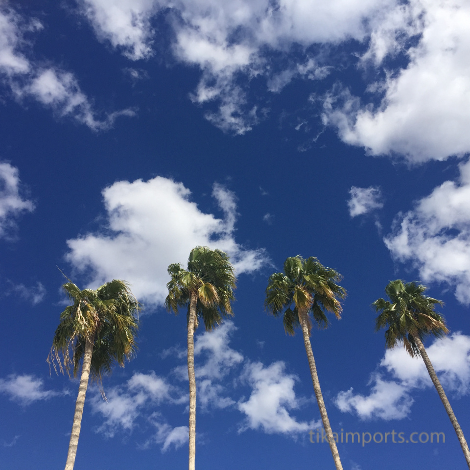 palm trees against the desert sky