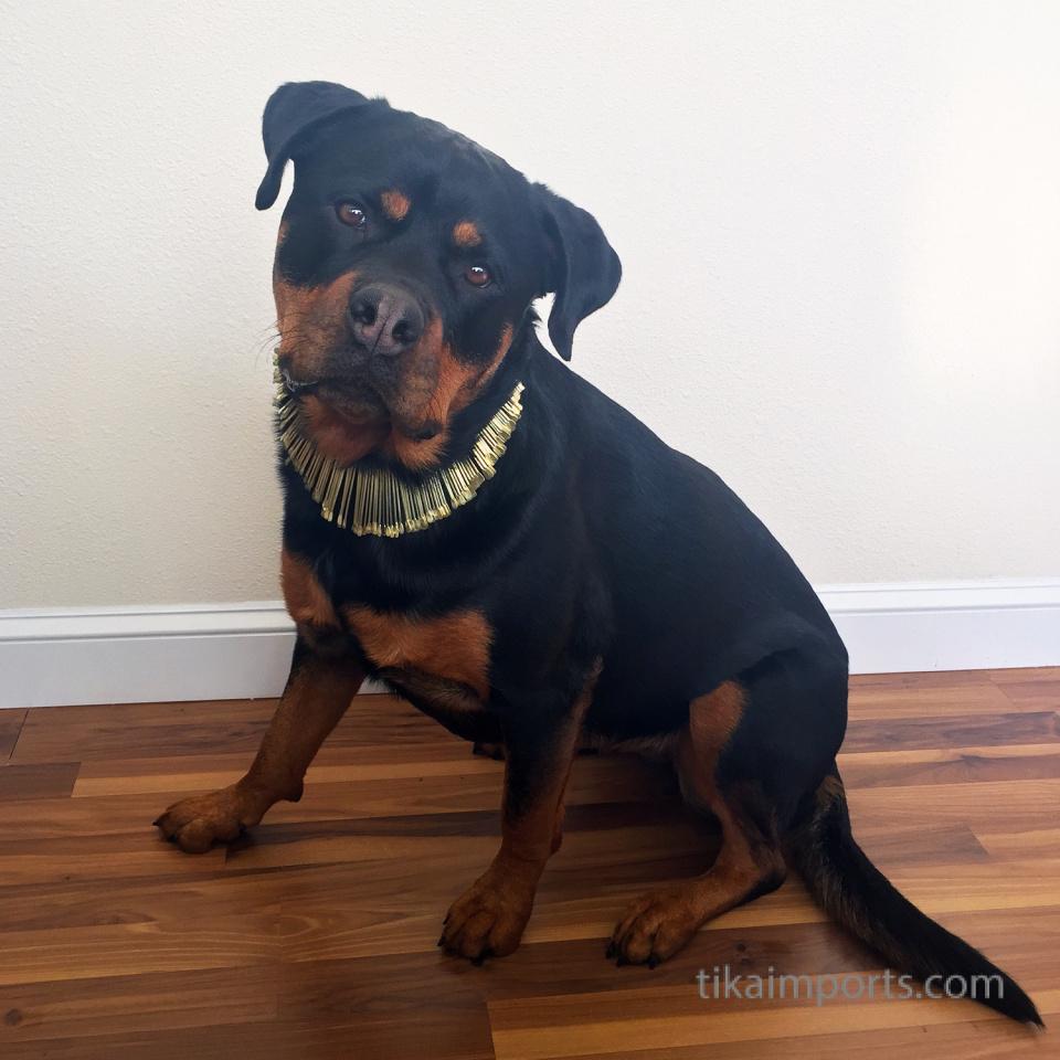 office dog Kaya modeling the Sun Ray necklace