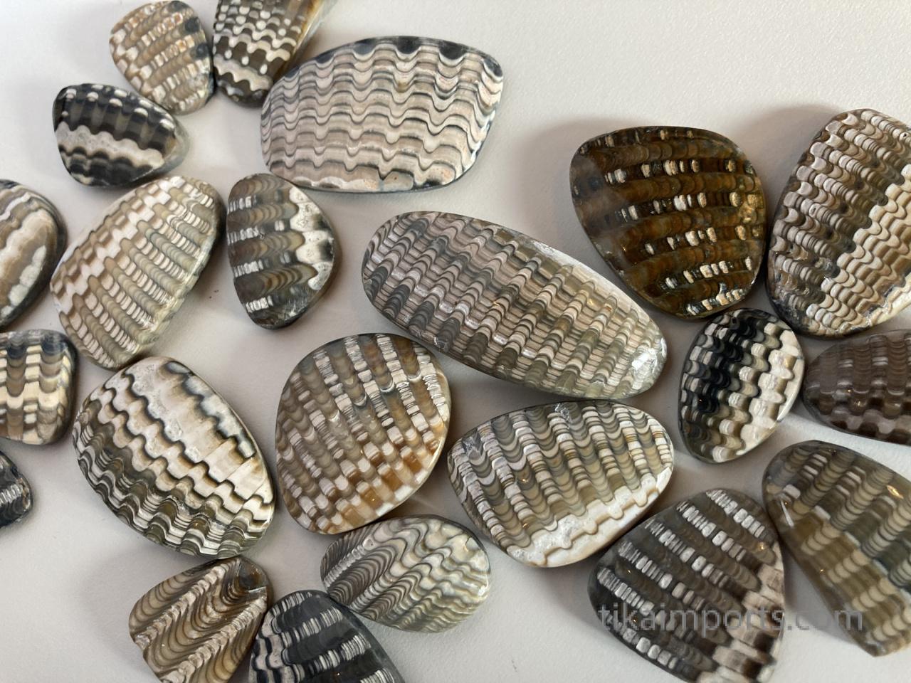 Anadara fossil shell cabochons